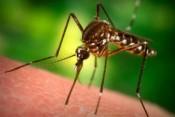Paludismo-mosquito-450x300