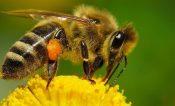 Llaman a no destruir panales de abejas